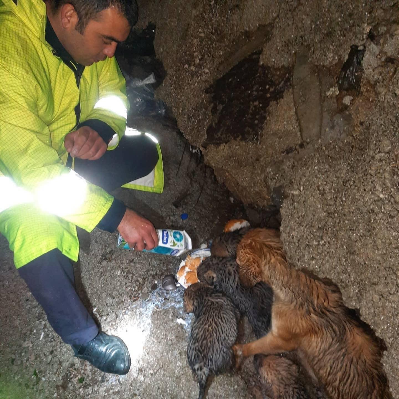 Derede Mahsur Kalan Köpekleri İtfaiye Kurtardı